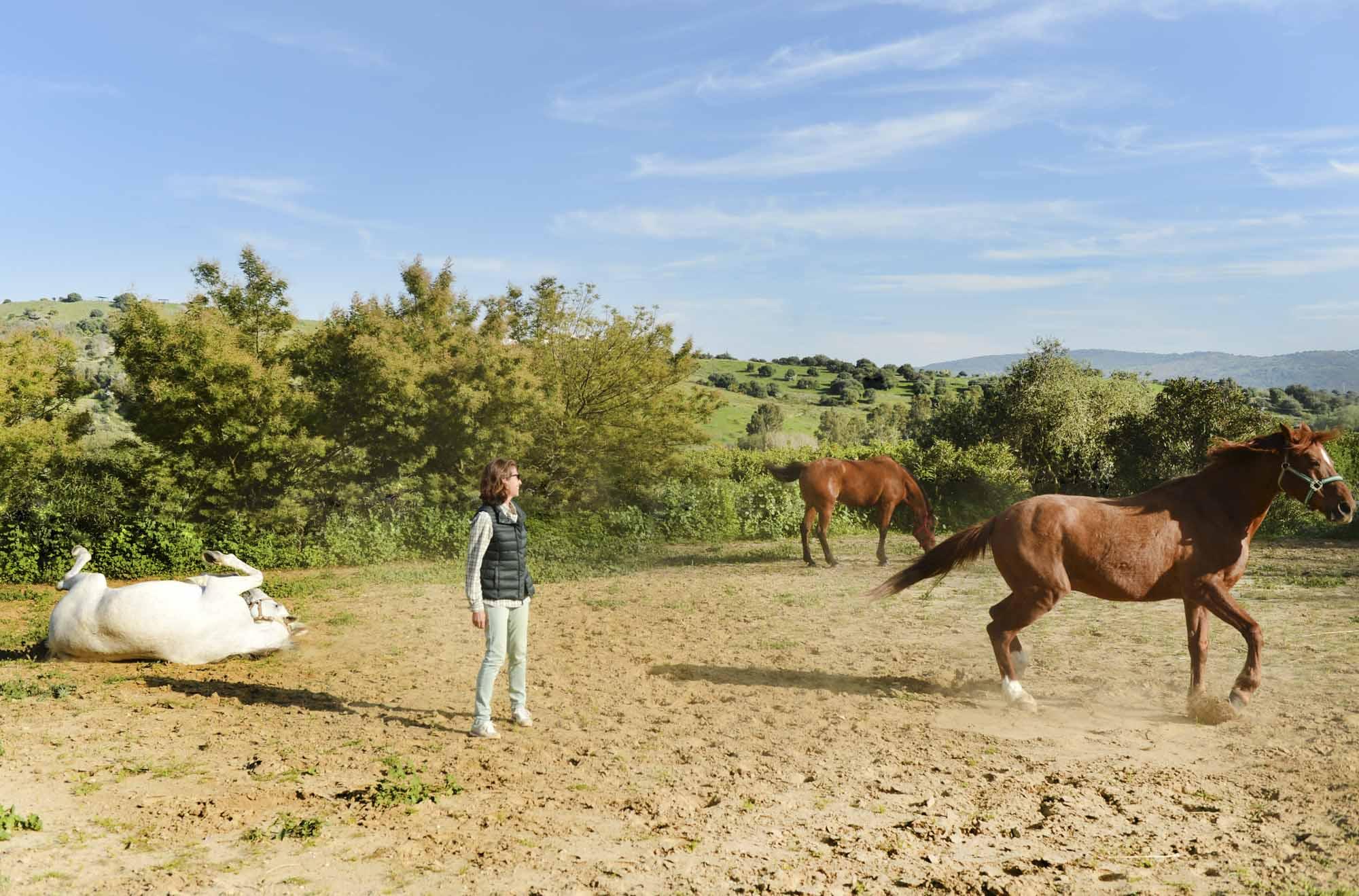 Isabel Echevarría con sus caballos