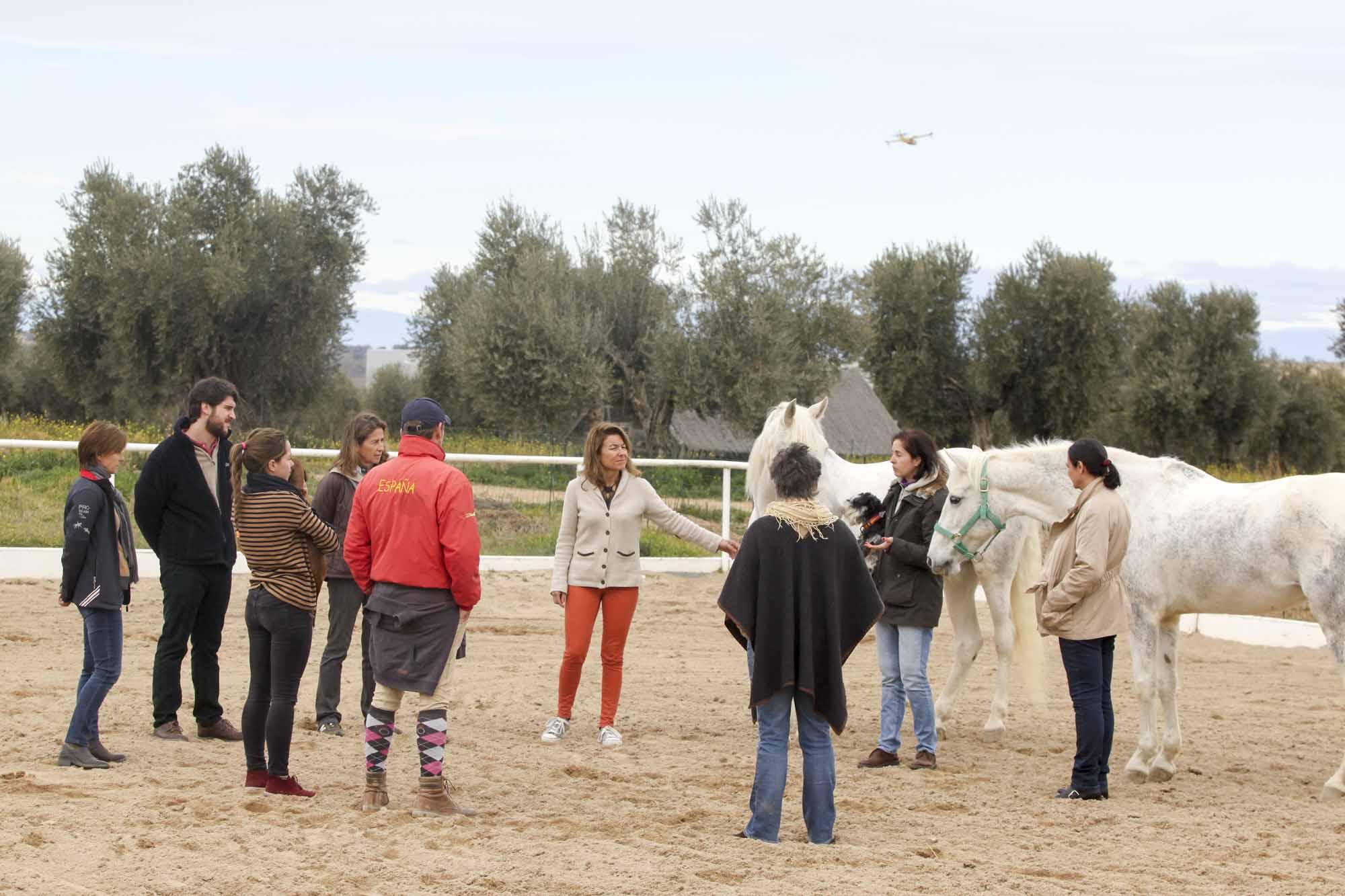 Coaching de grupo con caballos