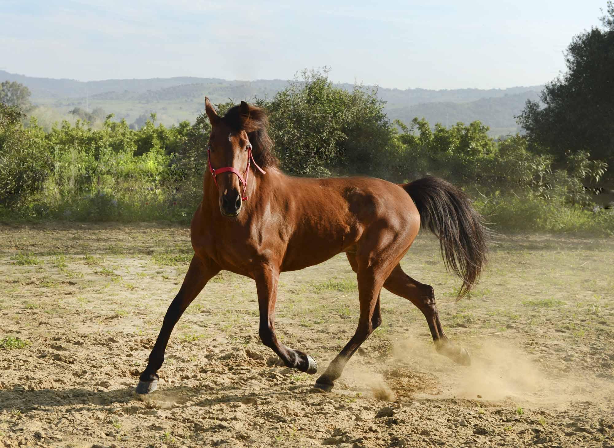 """""""Levante"""", el caballo favorito de Isabel"""